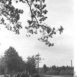 WWII-Alemania-operación Market Garden-militaria-lagleize1944 (11)